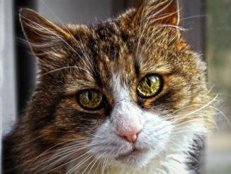 cat in flat 13