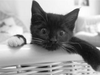 cat in flat 24